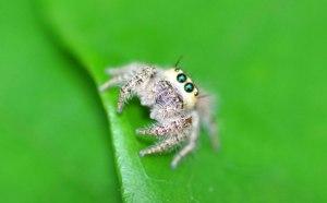 cute-spider2
